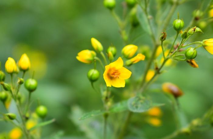 открытка желтые цветы
