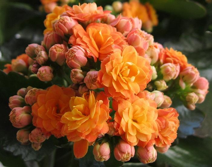 оранжевые цветы открытка с днем рождения
